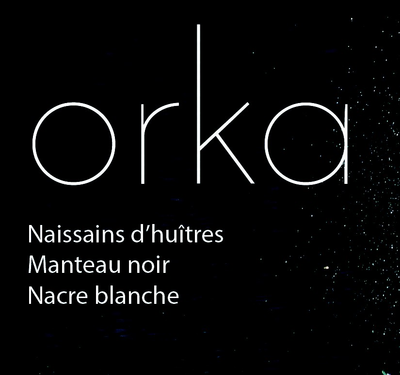 Orka: birth of an oyster black coat white mother-of-pearl